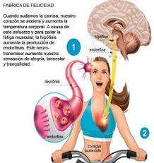 images - How the Body Function When you Exercise.